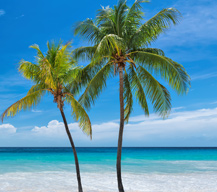 Travel Blog Enews signup - Palm tree graphic